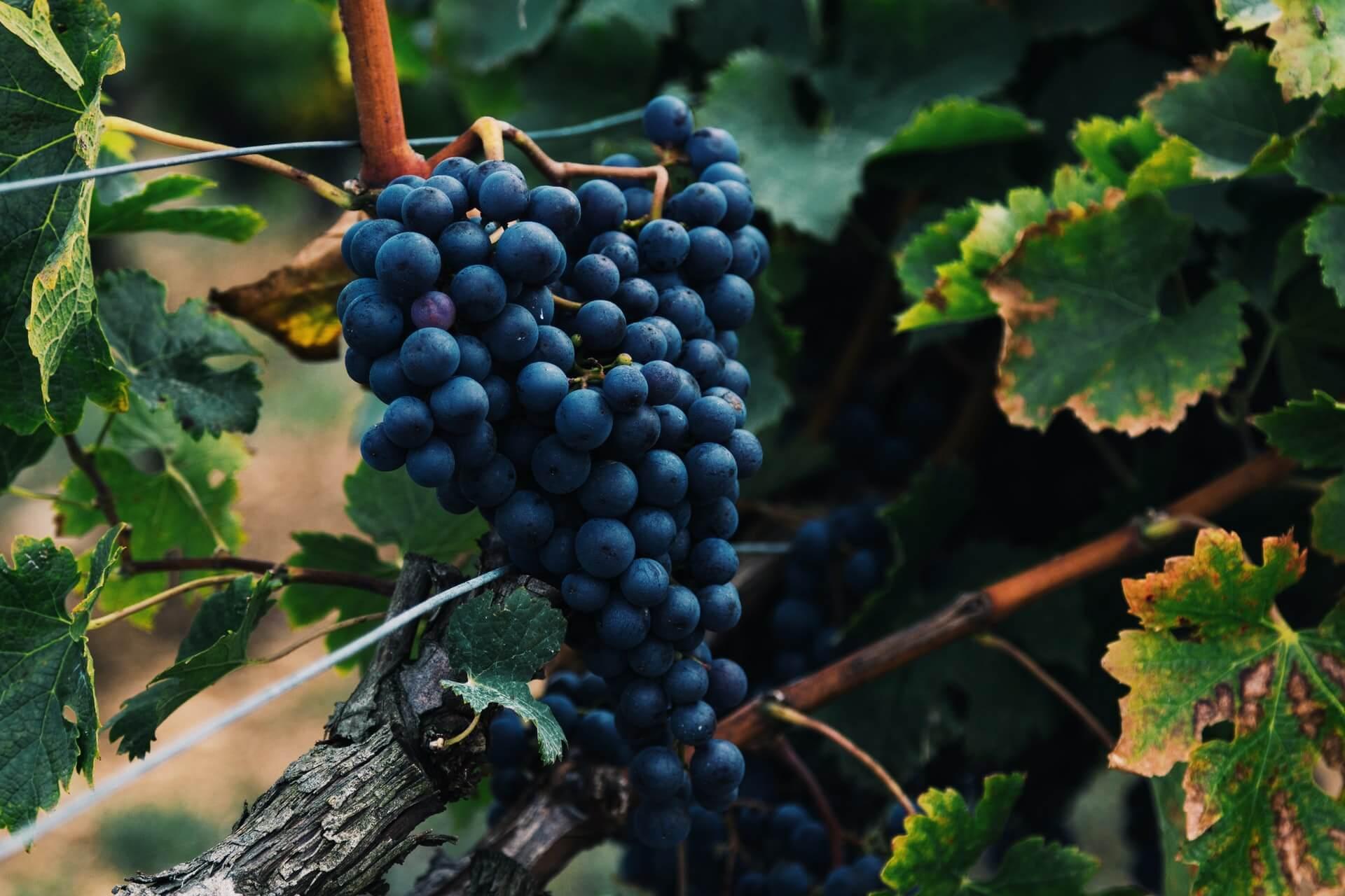 Cantina Terrasol Azienda vinicola con produzione di vini autoctoni siciliani a Modica