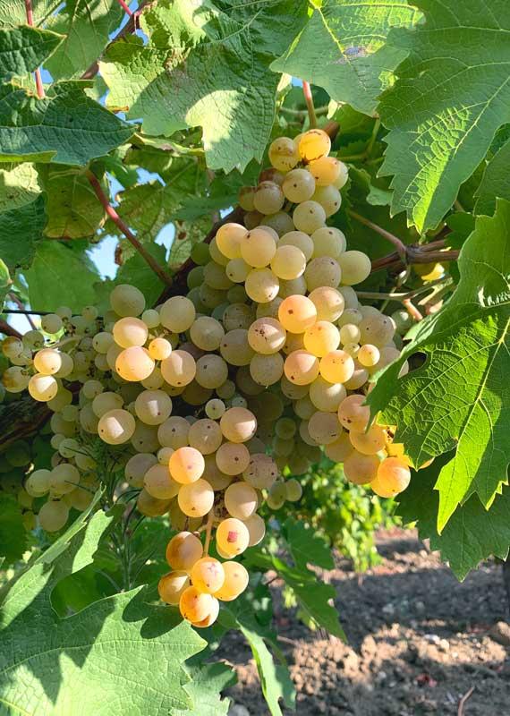 Vini Siciliani Cantina Terrasol Modica Vendita online vino